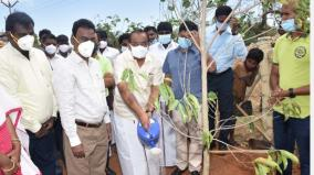 nut-planting-work-of-5-lakh-saplings-in-dindigul-district-minister-a-chakrabarty-has-started