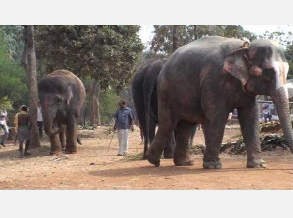 case-for-keeping-temple-elephants-in-a-large-forest-high-court-issues-notice-to-govt