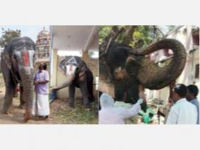 temple-elephant-care-high-court-orders-forest-department-to-file-report