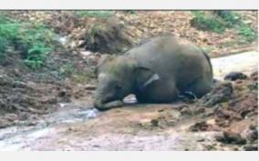 cub-elephant