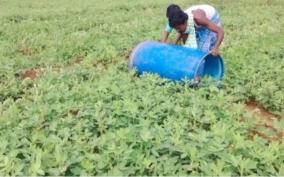 groundnut-farmers