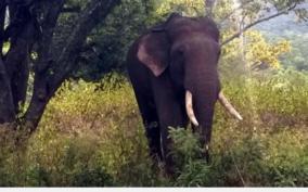 private-guard-killed-in-elephant-attack-near-coimbatore