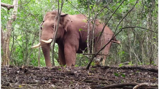 Postponement of work of fitting radio collar to Bhagupali elephant at Coimbatore Mettupalayam