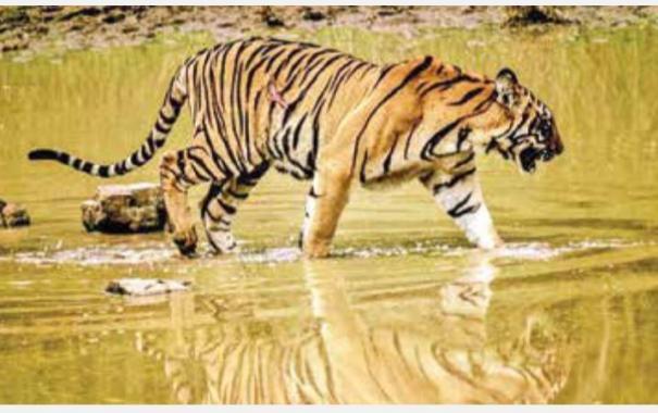 world-tiger-day