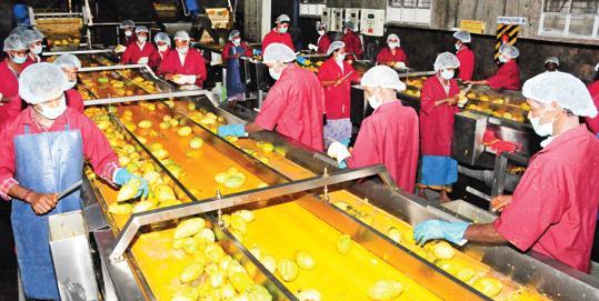 mango-farmers