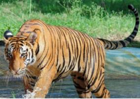 pm-greets-wildlife-lovers-on-international-tiger-day