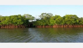 mangrove-forests-damaged-by-storm-itself-re-creation-case-high-court-notice-to-central-state-governments