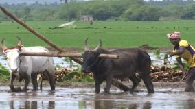 farmers-in-madurai-turn-to-traditional-farming-practices