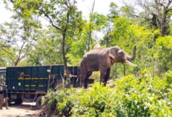 revalto-elephant-sent-back-to-forest