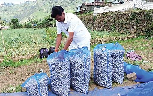 garlic-farmers