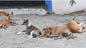 increased-canine-distemper-in-coimbatore-500-children-a-year-are-treated-at-the-government-hospital