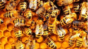 bees-chase-away-officials-at-vaigai-dam-water-opening-ceremony