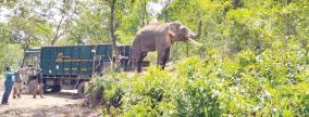 rivaldo-elephant