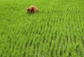 mrk-panneerselvam-on-paddy-farmers