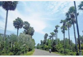 permission-to-cut-down-a-palm-tree-is-mandatory-an-allocation-of-rs-3-crore-for-palm-tree-development