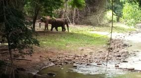 rivaldo-elephant-affair-change-with-mudumalai-forest-department-cage