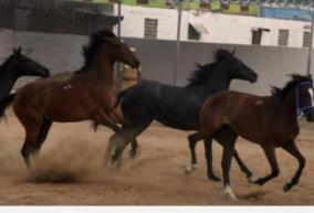 horse-racing-in-chennai-6-arrested-seizure-of-money