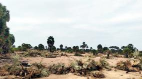 two-arrested-for-cutting-down-140-palm-trees-near-rameswaram-without-permission
