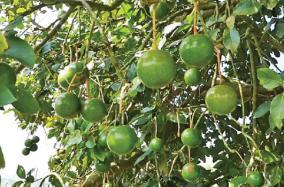 avocado-season