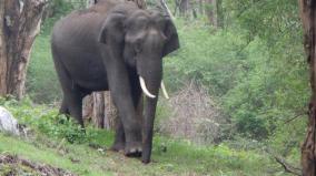 elephant-hunting-case