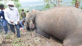474-elephants-died