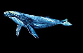 love-song-of-blue-whale