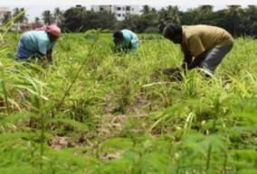no-fertilizer-no-purchase-of-paddy-when-will-the-farmers-pain-be-relieved