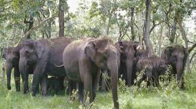 32-elephants-death-in-5-years