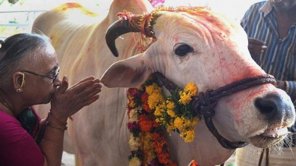 cow-should-be-declared-national-animal-allahabad-hc