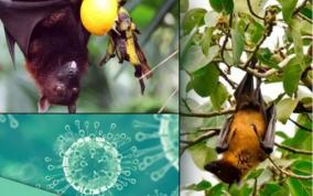 boy-dies-of-nipah-virus-in-kerala-central-team-rushed-to-state