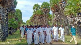palm-is-the-only-non-hybrid-tree-action-to-develop-pananthoppai-near-aranthangi-as-a-palm-park-minister-meyyanathan
