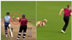 cricket-match-halted-as-dog-steals-the-ball