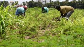 insure-samba-season-crops-immediately-government-of-tamil-nadu-request