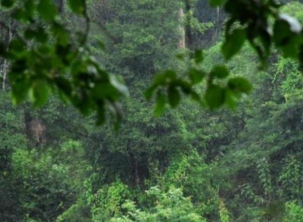 bail-for-valparai-forest-ranger