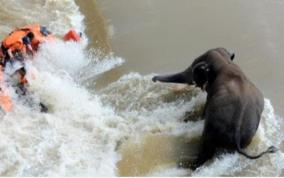 odisha-tv-journalist-dies-another-critical-after-boat-to-rescue-elephant-capsizes