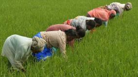 online-registration-for-paddy-purchase
