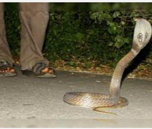 new-trend-of-snake-bite-murders-says-supreme-court-denies-bail-to-accused