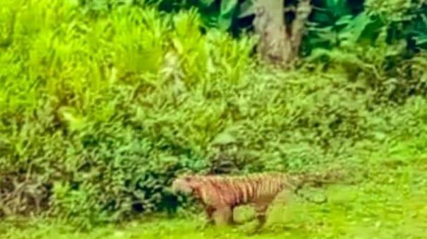 t-23-tiger-found