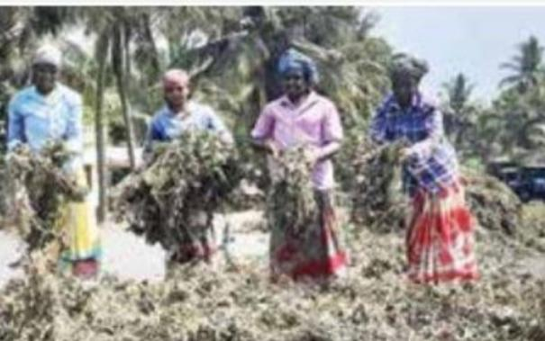 direct-purchase-from-black-gram-and-green-gram-farmers-how-government-notice