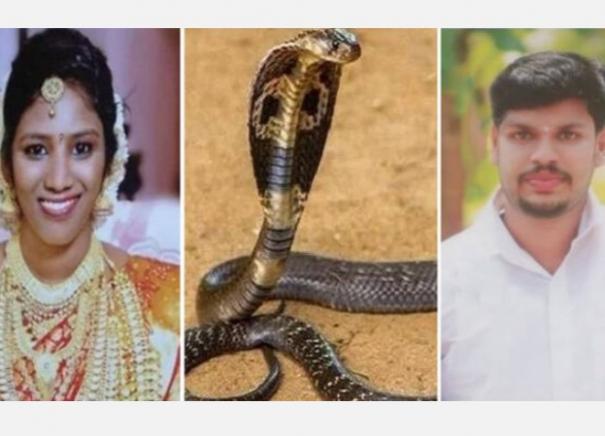 uthra-murder-case-kerala-man-who-killed-wife-using-cobra-awarded-life-imprisonment