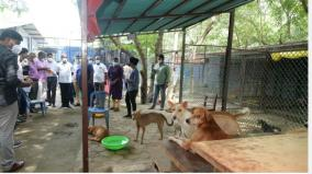 45-dogs-die-at-iit-chennai-minister-ma-subramanian-s-surprise-inspection