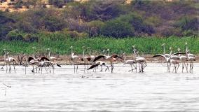 migratory-birds-in-perungulam