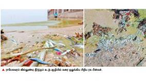 fishes-dying-in-palk-strait