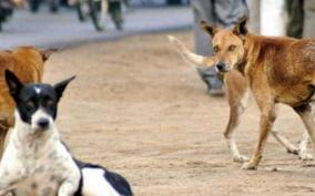 pudhucherry-7-dogs-poisoned-to-death